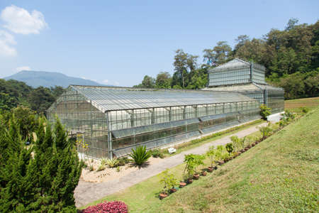 plants species: Building plants cultivation arranged for the collection of plant species