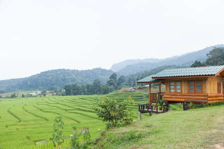 peasant farming: Home adjacent rice fields Home of peasant farming in agricultural areas.