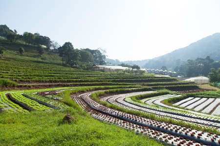 plots: Vegetable plots in the mountain areas of the agriculture in the area. Stock Photo