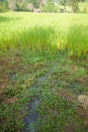 arable farming: Water flow into rice fields Arable farming in mountain areas