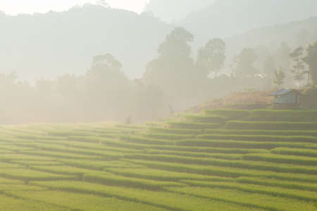 rice field on mountain in morning.Stepped rice fields on mountain. photo
