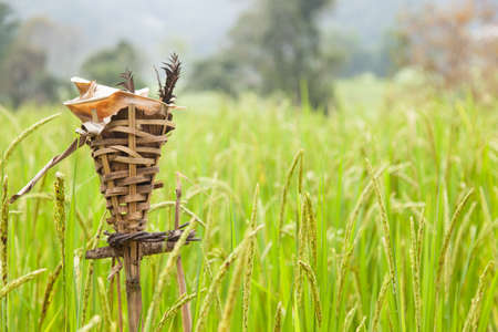 livelihoods: Rites rice Expresses the importance of rice to the livelihoods of farmers. Stock Photo