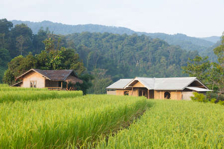 House and rice fields Arable farming in the mountain areas Houses and fields on the mountain. photo