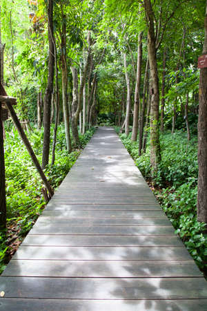 Wooden bridge in the park There are trees on both sides of the trees in the garden. photo