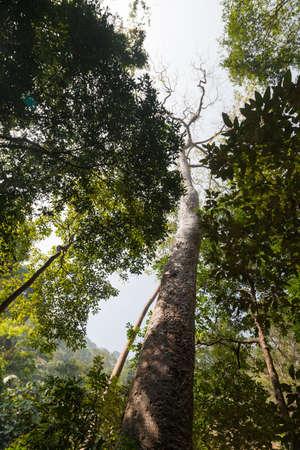 abundant: The forests are abundant tropical fruits.