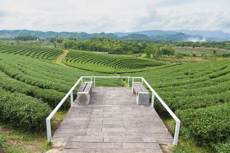 agricultural area: Viewpoint in tea plantations Agricultural area of growing tea on the mountain vast.