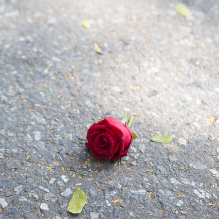 broken heart: Rose on the floor Feeling isolated and lonely Red rose that fell on the floor.