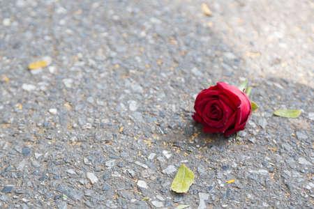 saint valentin coeur: Rose sur le plancher sentant isol� et solitaire rose rouge qui est tomb� sur le sol.