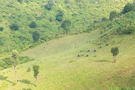 Farmland and livestock farming The mountain is encroaching on forest land. Stock Photo