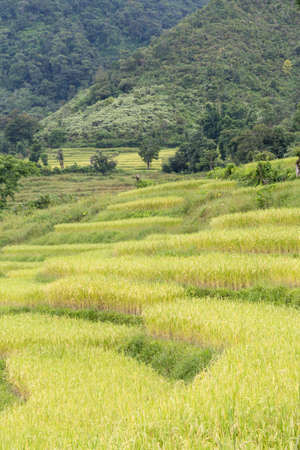 land management: Rice farm on the mountain Agricultural cultivation on the mountain. The mountains and forests