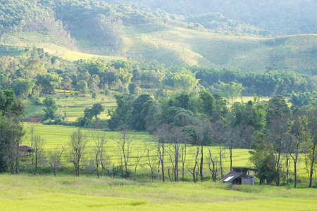 arable farming: Hills and farmland The arable farming in mountain forest cover. Stock Photo