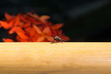 unhygienic: Macro fly perched on a pipe. Fly perched on a small yellow pipe. Stock Photo