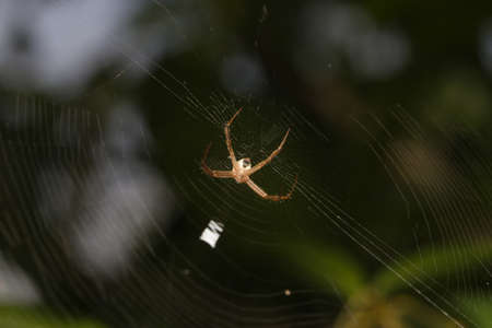 spider webs: Spider webs are made under the tree. The for hunting Stock Photo