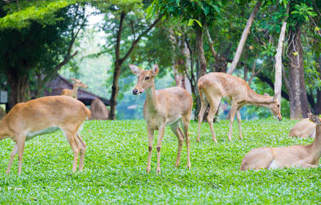 suburbia: The wild deer in animal park when the day Stock Photo