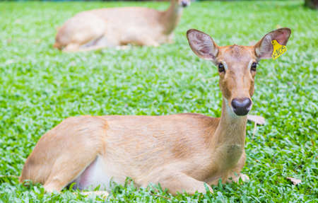 The wild deer in animal park when the day Stock Photo