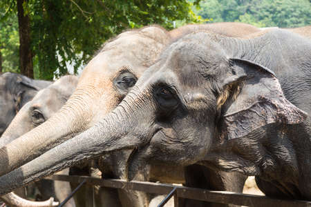 People are watching elephant in zoo during midday
