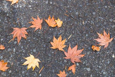 Hojas De Otoño En Japón Hojas De Colores En El Invierno Fotos ...