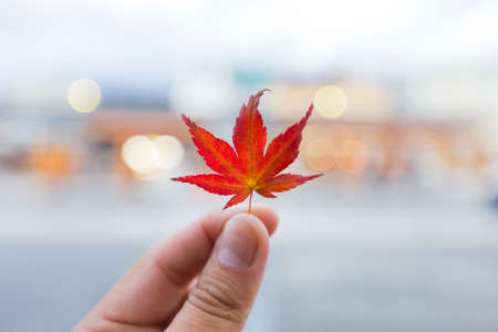 Autumn leaves change color Into the winter Leaves of trees begin to discolor and fall. Stock Photo