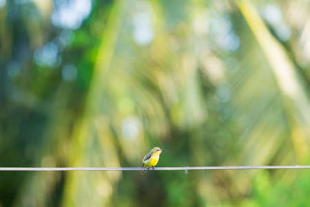small bird on wire. yellow and green small bird on wire. Banco de Imagens