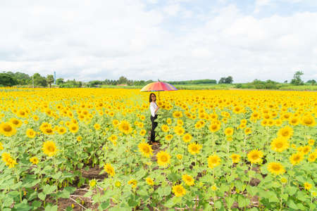 Woman holding umbrellas in sunflower fields Hot and clear in the daytime Banque d'images