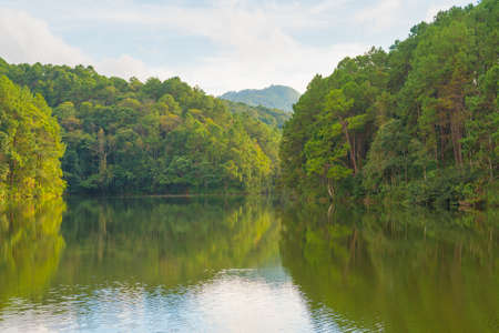 Forest and reservoir in mountain and tree in nation park north Thailand.