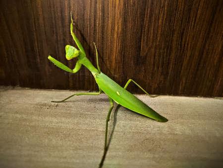 Green Locust aka Grass hopper climbing wall.