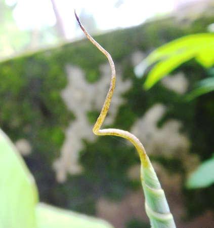 Banana Leaf Top Edge photo