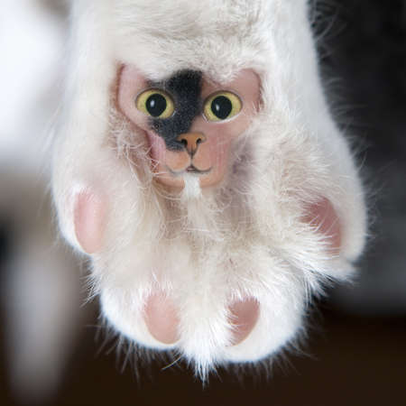 gremlin: funny hairy cat pad with eyes, nose, mouth and a beard looks like a teddy