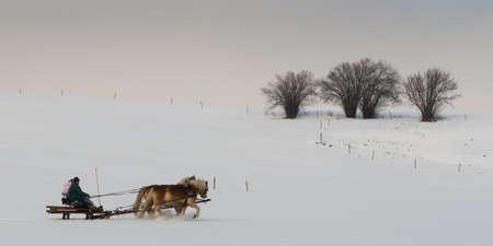 vervoer drwan door twee paarden op een idyllische winterse dag met bomen in de rug
