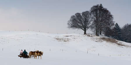horse drawn carriage: carriage drwan by two horses at a idyllic winter day with trees in the back Stock Photo
