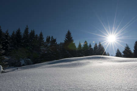 wonderful and dreamy winter scenery with a lot of snow, trees, sun and blue sky Stock Photo - 12772181