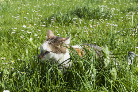 young cat hides between high fresh green grass and lot of spirng flowers photo