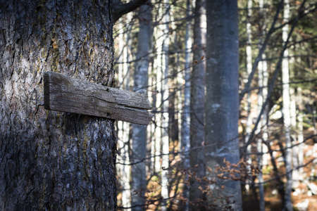 threw: old wooden direction sign guides the way threw the forest in fall