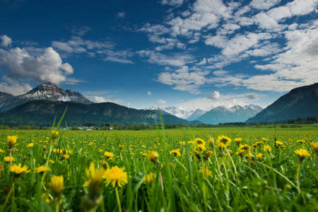 meadow with dandelions and tyrol mountains at blue sky photo