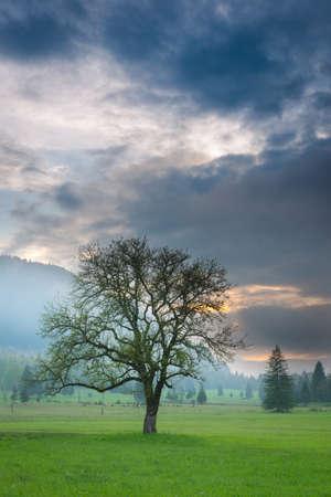 vue verticale d'un seul arbre au coucher du soleil brumeux Banque d'images - 19727175