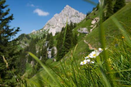 raide montagne verte prairie avec des fleurs blanches