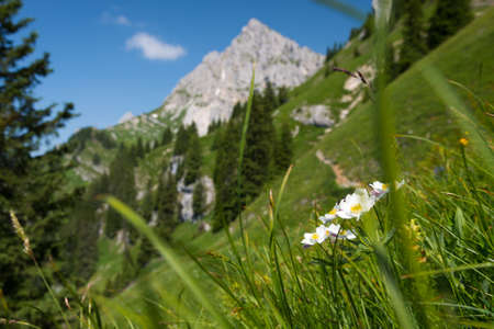 steep green mountain meadow with white flowers