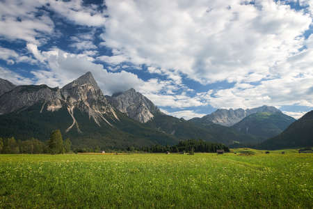 flower meadow with austrian mountains