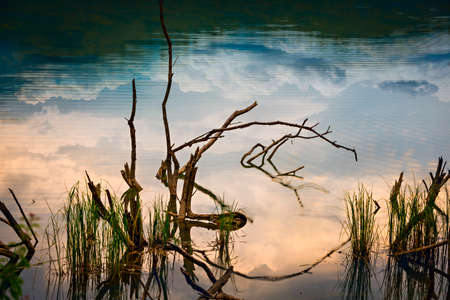 some branches and grasses in river with reflecting clouds