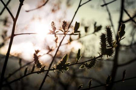 shining through: sun shining through branches of tree in springtime Stock Photo