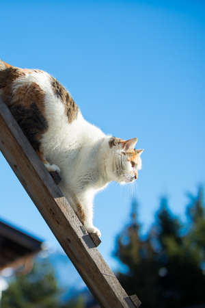 trichromatic: female cat walking down a woodenb ladder at blue sky