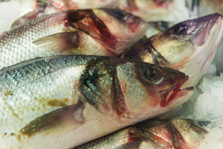 glimmering: several gleaming dead trout fishes lying on ice for market