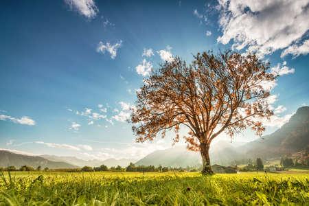 prachtige boom vallen op groene weide met bergen in Tirol Stockfoto