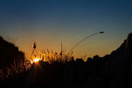 Sun flower: letzten Sonnenstrahlen Throught Gras auf dem Berg Sonnenuntergang glänzend Lizenzfreie Bilder