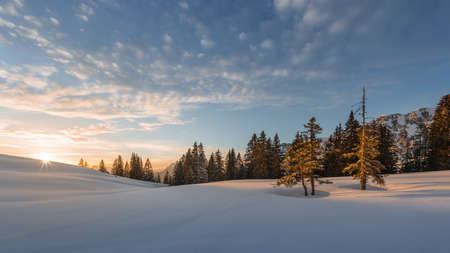 dyllic: trees lighted from sunset at snow field in winter at tannheim Stock Photo