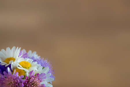valentine greeting card background with garden flower blossoms in corner