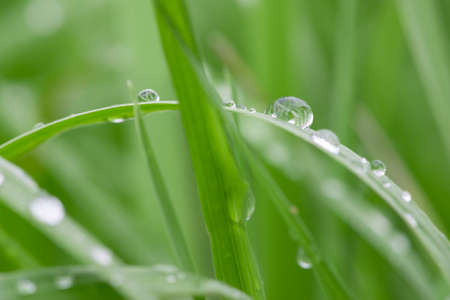 macro of water drops on green grass