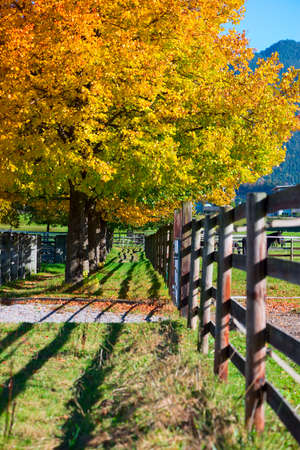 colorfull fall autumn tree next to wooden fence Stock Photo