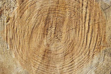 wood texture close up Stock Photo - 11084169