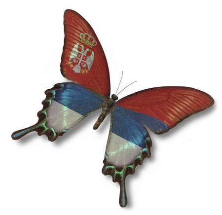 Serbia flag on butterfly isolated on white Stock Photo - 13508303